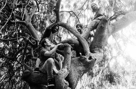 Elephant Tree Band